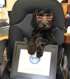 The Office Dog, Baron