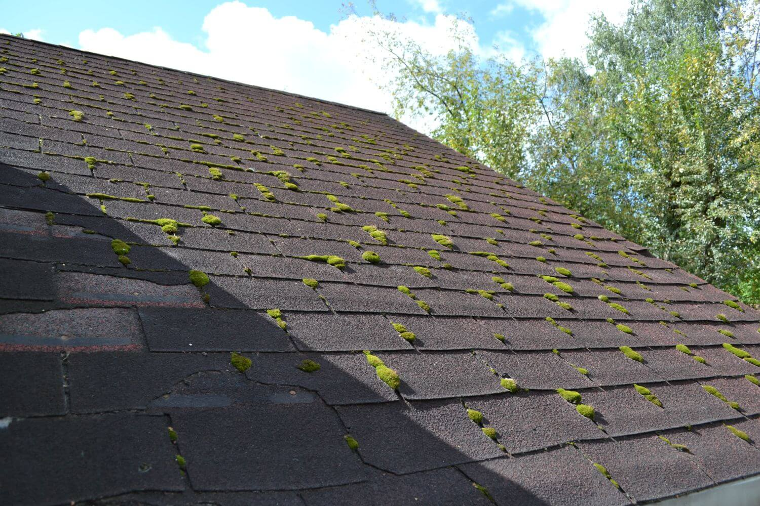 How To Clean Moss Off Your Roof home windows